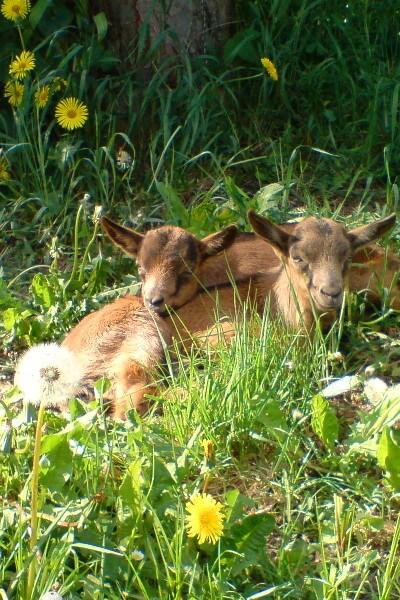 schlafende Tiere auf der Weide