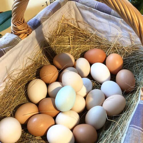 Eier im Korb Nahaufnahme