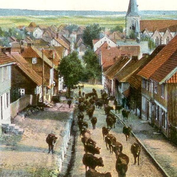 Harzer Rotes Höhenvieh Viehtrieb durch einen Ort Historisches Bild